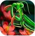 螳螂模拟器破解版app下载_螳螂模拟器破解版app最新版免费下载